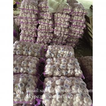 Chinese 100% Pure White Snow White Garlic Packed in Mesh Bag or Carton Box From Jinxiang China