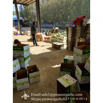 Jinxiang Fresh 5.0-5.5cm Chinese Red Garlic Packed in Carton Box for Garlic Wholesale Buyers around the world