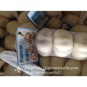 100% Pure White Garlic European Quality Standard Exported to Costa Rica