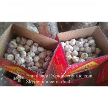 Jinxiang Fresh 5.0-5.5cm Chinese Red Garlic Packed in Carton Box for Garlic Wholesale Buyers around the world