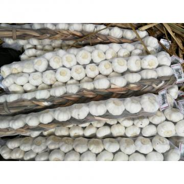 Chinese 100% Pure White Garlic Exported to Costa Rica