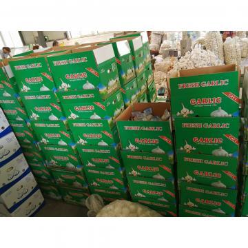 Wholesale Chinese Garlic Normal White 5.0cm Natural Garlic Packed in Carton Box
