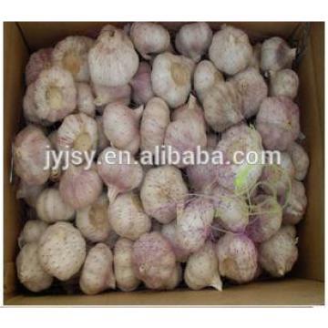 fresh garlic for 2017 crop