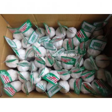 garlic of china superior quality and good price