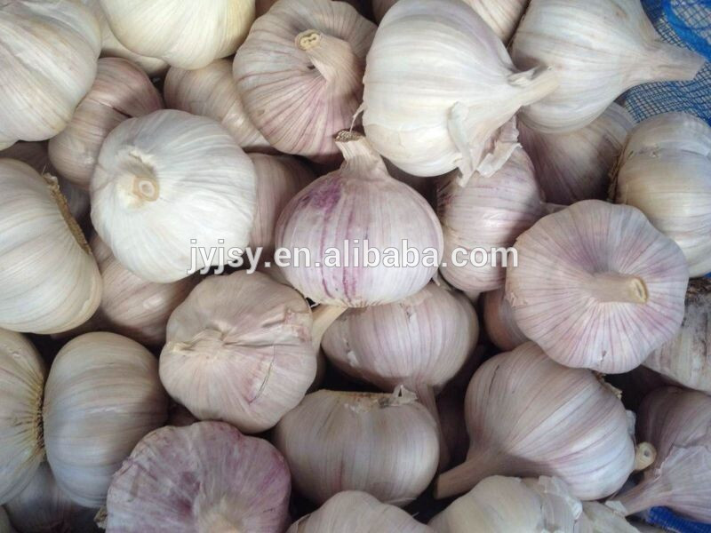 Chinese garlic for 2017