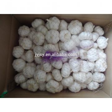 fresh garlic of 2017