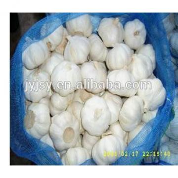 fresh garlic / pure white garlic/ pure white garlic from jinxiang shandong china
