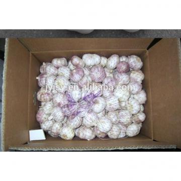 pure white and normal white garlic