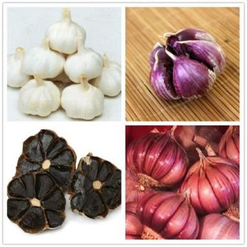 100 Pcs/bag Multi-Petals Garlic Seeds Organic Vegetables Kitchen Seasoning Food