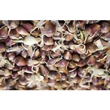 Carpathian Garlic-cold weather garlic-25 bulbils-  ROCAMBOLE VARIETY. HARDNECK