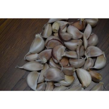 PORTUGUESE Fresh GARLIC SEEDS BULB - Great Flavour - Free Shipping