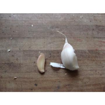WYOMING. Organic Garlic  100 + Bulbs , Heirloom, For Planting  LARGE BULBS