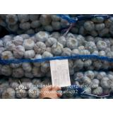 Hot Sale Chinese Fresh Purple Red Garlic Big Garlic 6.0cm and up Size with Box Packing