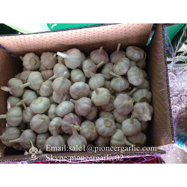 Jinxiang Fresh 5.0-5.5cm Chinese Red Garlic Packed in Carton Box for Garlic Wholesale Buyers around the world #1 image