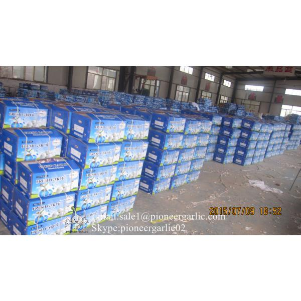 Jinxiang Fresh 5.0-5.5cm Chinese Red Garlic Packed in Carton Box for Garlic Wholesale Buyers around the world #2 image