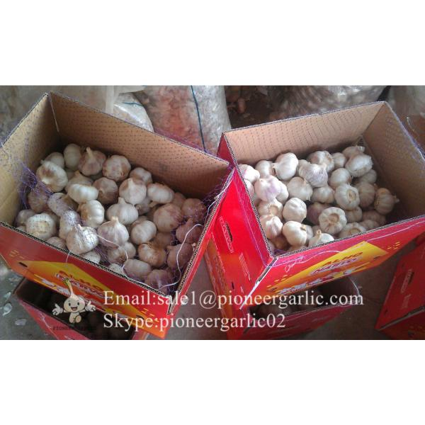 Jinxiang Fresh 5.0-5.5cm Chinese Red Garlic Packed in Carton Box for Garlic Wholesale Buyers around the world #3 image